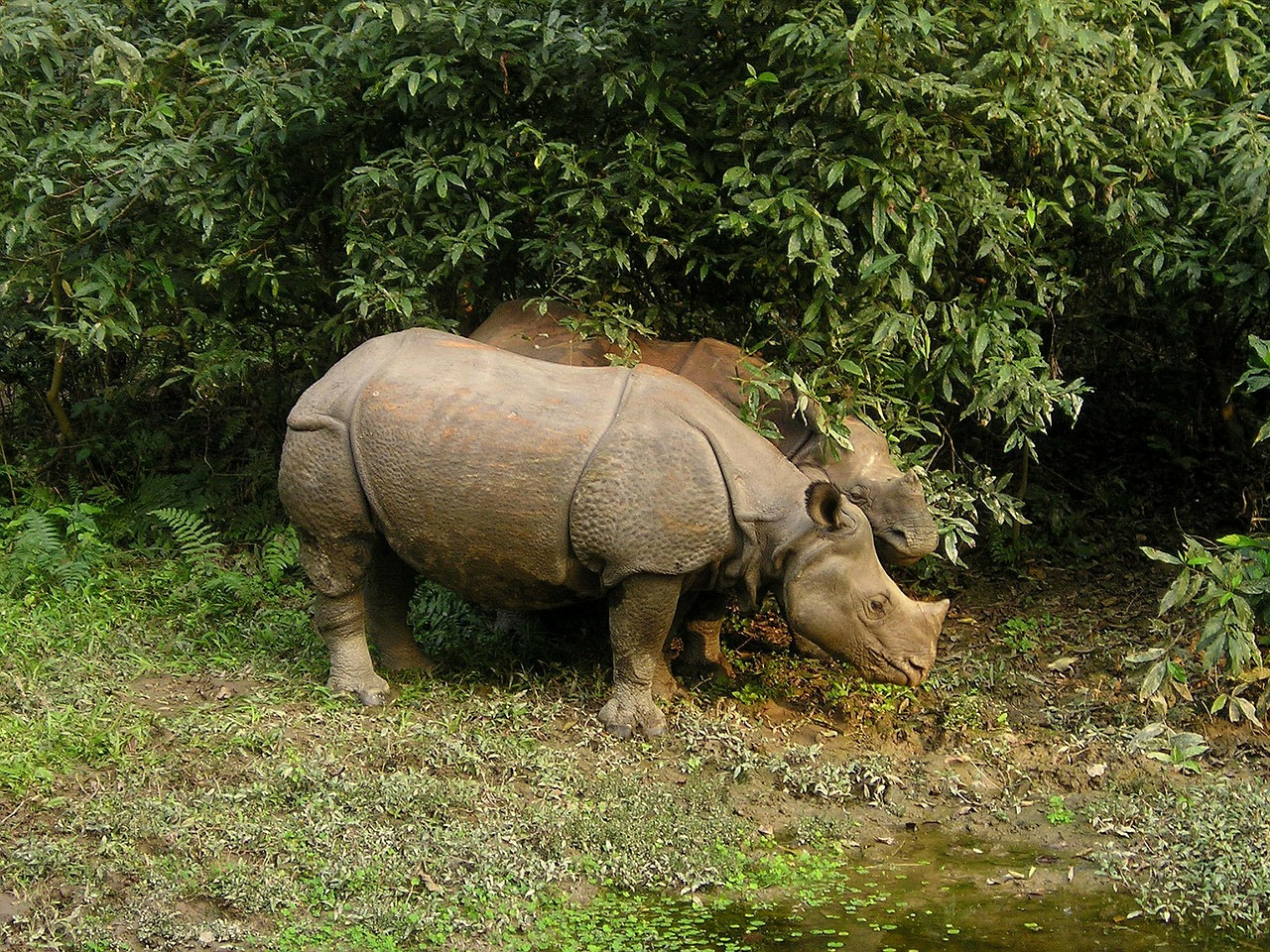 Chitwan tour package-1 Night/ 2 Days Package