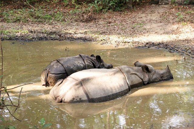 Chitwan tour package-3 Night/ 4 Days Package